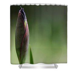 Today A Bud - Purple Iris Shower Curtain by Debbie Oppermann