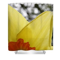 Today Shower Curtain by Lainie Wrightson