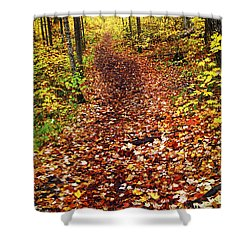 Trail In Fall Forest Shower Curtain by Elena Elisseeva