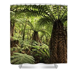 Tree Ferns Shower Curtain by Les Cunliffe