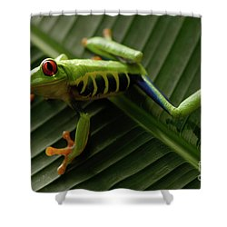 Tree Frog 16 Shower Curtain by Bob Christopher
