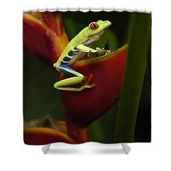 Tree Frog 3 Shower Curtain by Bob Christopher