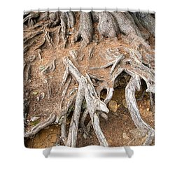 Tree Root Shower Curtain by Matthias Hauser