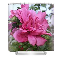 Tree Rose Of Sharon Shower Curtain by Kay Novy