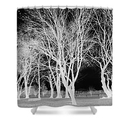 Trees In Park 2 Shower Curtain by Chalet Roome-Rigdon