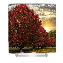 Trees On Fire Shower Curtain by Debra and Dave Vanderlaan