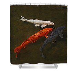 Tri-colored Koi Shower Curtain by Rona Black