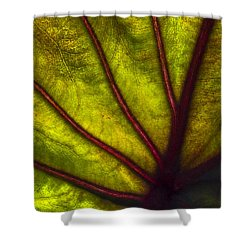 Tributaries Shower Curtain by Debra and Dave Vanderlaan