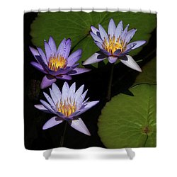 Trio Of Purple Water Lilies Shower Curtain by Sabrina L Ryan