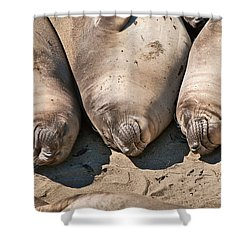 Trio Of Sleeping Northern Elephant Seals Mirounga Angustirostris At The Piedras Blancas Beach Shower Curtain by Jamie Pham