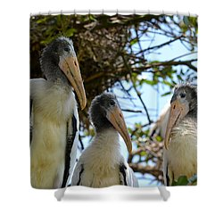 Triplet Wood Stork Nestlings Shower Curtain by Richard Bryce and Family