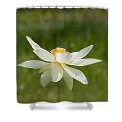 Tropical Lotus Flower Shower Curtain by Kim Hojnacki