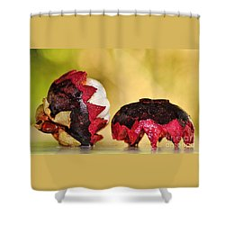 Tropical Mangosteen Shower Curtain by Kaye Menner