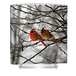 True Love Cardinal Shower Curtain by Peggy  Franz
