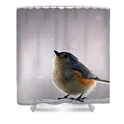 Tufted Titmouse Shower Curtain by Cricket Hackmann