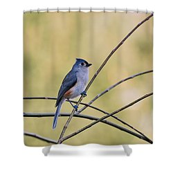 Tufted Titmouse Shower Curtain by Francie Davis
