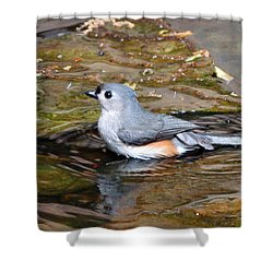 Tufted Titmouse In Pond II Shower Curtain by Sandy Keeton