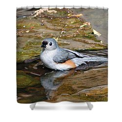 Tufted Titmouse In Pond Shower Curtain by Sandy Keeton