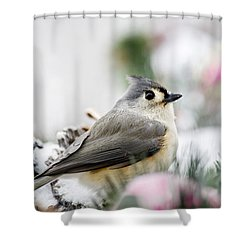 Tufted Titmouse Portrait Shower Curtain by Christina Rollo