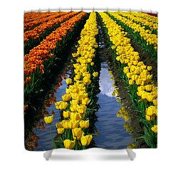 Tulip Reflections Shower Curtain by Inge Johnsson
