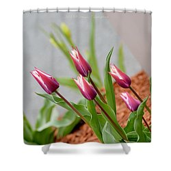 Tulip Time Shower Curtain by Sonali Gangane