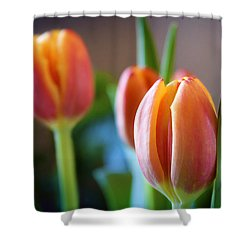 Tulips Artistry Shower Curtain by Milena Ilieva