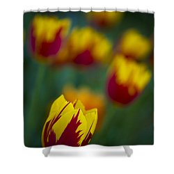 Tulips Shower Curtain by Chevy Fleet