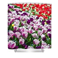 Tulips Field Shower Curtain by Sebastian Musial