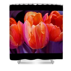 Tulips In Orange And Purple Shower Curtain by Jennie Marie Schell