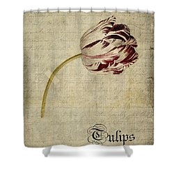 Tulips - S01bt2t Shower Curtain by Variance Collections