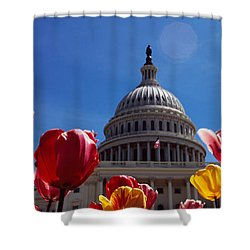 Tulips With A Government Building Shower Curtain by Panoramic Images