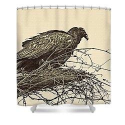 Turkey Vulture V2 Shower Curtain by Douglas Barnard