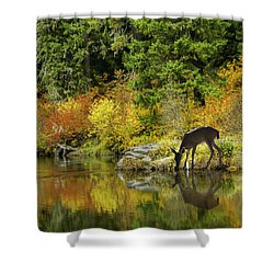 Tuti Fruti Colors And Eye Candy Reflections Shower Curtain by Diane Schuster