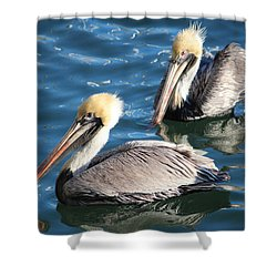 Two Beautiful Pelicans Shower Curtain by Cynthia Guinn
