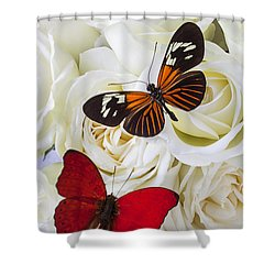 Two Butterflies On White Roses Shower Curtain by Garry Gay