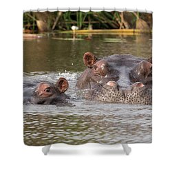 Two Hippopotamus Hippopotamus Amphibius Shower Curtain by Panoramic Images