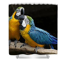 Two Parrots Squawking Shower Curtain by Dave Dilli