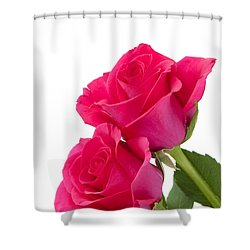 Two Roses Shower Curtain by Anne Gilbert