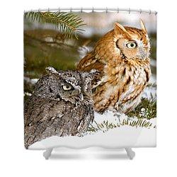 Two Screech Owls Shower Curtain by John Pitcher