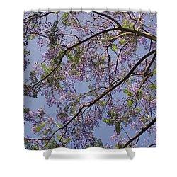 Under The Jacaranda Tree Shower Curtain by Rona Black