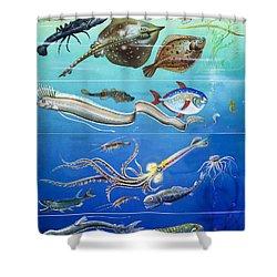 Underwater Creatures Montage Shower Curtain by English School