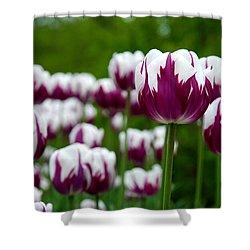Unusual Tulips Shower Curtain by Jennifer Ancker