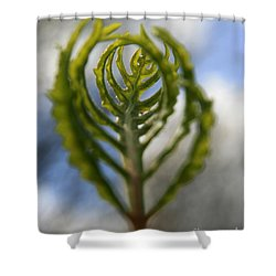 Unwrapped Shower Curtain by Neal  Eslinger