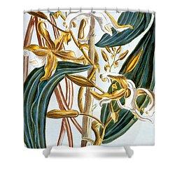 Vanilla Pods Shower Curtain by Pierre-Joseph Buchoz