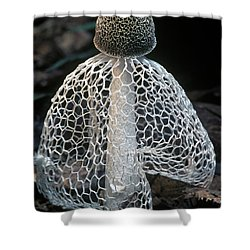 Veiled Lady Dictyophora Indusiata Shower Curtain by Albert Lleal