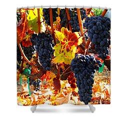 Vineyard 8 Shower Curtain by Xueling Zou