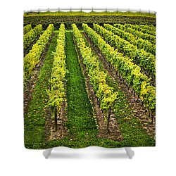 Vineyard Shower Curtain by Elena Elisseeva