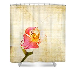 Vintage White Orchid Shower Curtain by Delphimages Photo Creations
