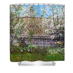 Viola's Apple And Cherry Trees Shower Curtain by Ylli Haruni