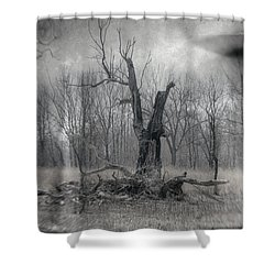 Visitor In The Woods Shower Curtain by Jim Shackett
